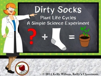 Science Experiment: Dirty Socks