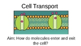 Simplified Cellular Transport PowerPoint