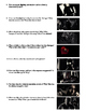 Sin City Film (2005) Study Guide Movie Packet