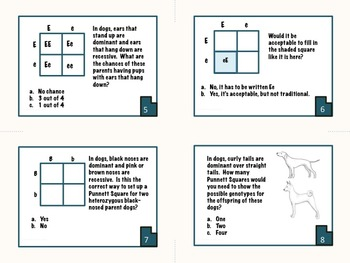 Punnett Squares Task Cards and Informational Text