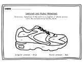 Singular and Plural Pronouns