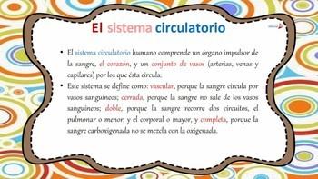 Sistema Circulatorio Humano