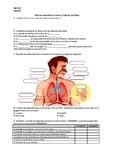 Sistema respiratorio humano - la hoja de ejercicios