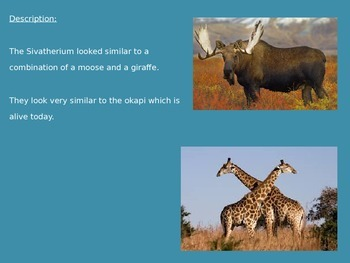 Sivatherium - Extinct Moose Like - Power Point - Information Facts