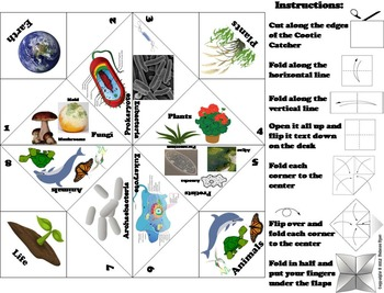 The Six Kingdoms of Life Activity: Plants, Animals, Bacteria, Protists, etc.