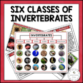 Six Main Classes of Invertebrates | Nature Curriculum in Cards