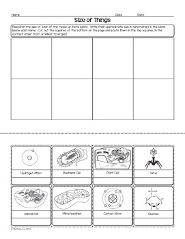 Size of Things Biology Homework Worksheet