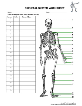 skeletal system worksheet by family 2 family learning resources - Skeletal System Worksheet