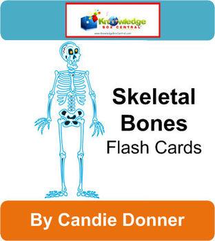 Skeletal Bones Flash Cards