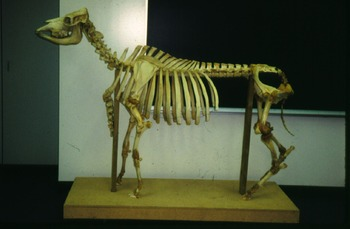 Skeletal Displays in the Classroom