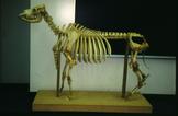 Skeletal Displays in the Classroom