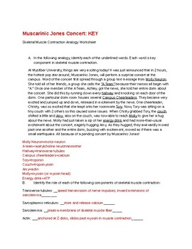 Skeletal Muscle Contraction Analogy A&P Physiology Worksheet NMJ Sarcomere KEY