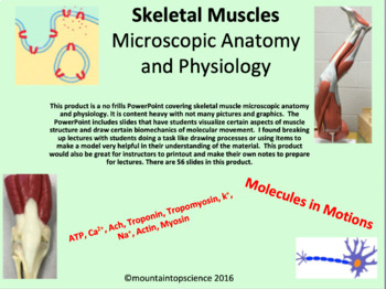 Skeletal Muscle Structure and Physiology PowerPoint
