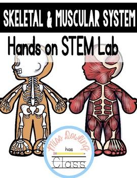 Skeletal & Muscular System STEM Lab