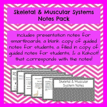 Skeletal & Muscular Systems Notes PowerPoint Pack & Kahoot!