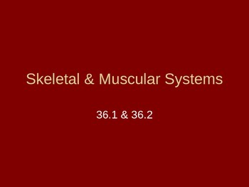 Skeletal & Muscular Systems PowerPoint