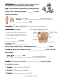 Skeletal System - Bundled Unit in WORD