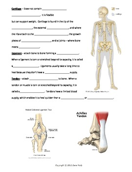 Skeletal System - Bundled Unit in WORD
