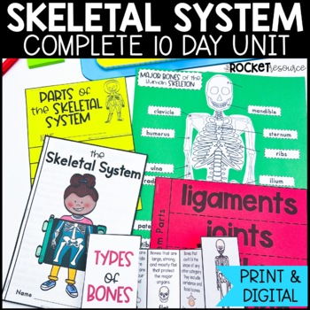 Skeletal System: Mini-unit including functions, bone facts, key ...