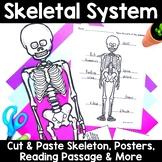 Skeletal System -Activities