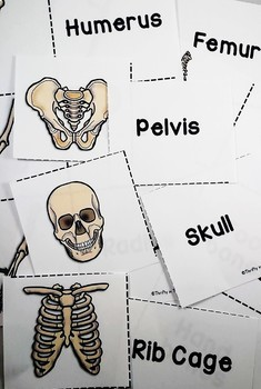 Skeletal System -Activities