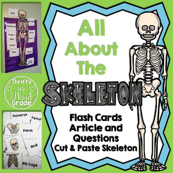Skeletal System Worksheets Teachers Pay Teachers