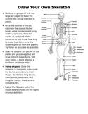 Skeletal System Activity