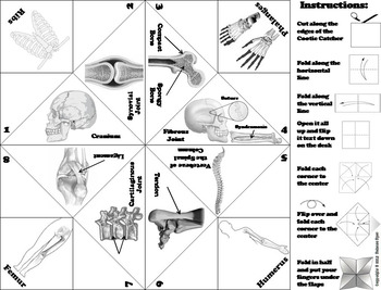 Bones and the Skeletal System Activity/ Foldable  (Human Body Systems Review)
