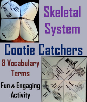 Bones and the Skeletal System Activity/ Foldable