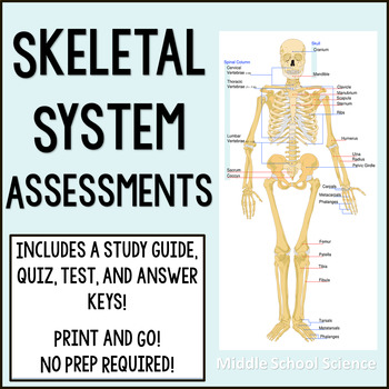 Skeletal System Assessments