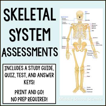 Skeletal System Assessments