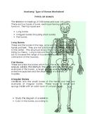 Skeletal System: Bone Types
