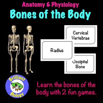 Skeletal System Bone Activity Teaching Resources | Teachers Pay Teachers