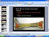 Skeletal System Lesson