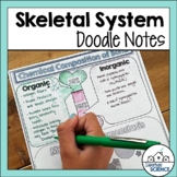 Skeletal System Doodle Notes & Diagrams - Distance Learning