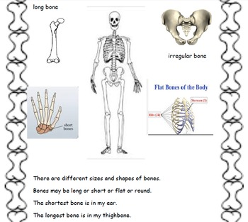 Skeletal System/Bones Unit