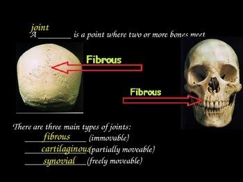 Skeletal System COMPLETE UNIT SET!