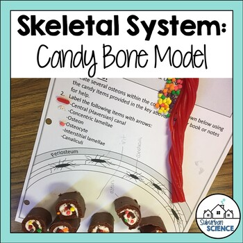 Skeletal System: Candy Compact Bone Activity