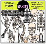Skeletal System Clip Art Bundle {Educlips Clipart}