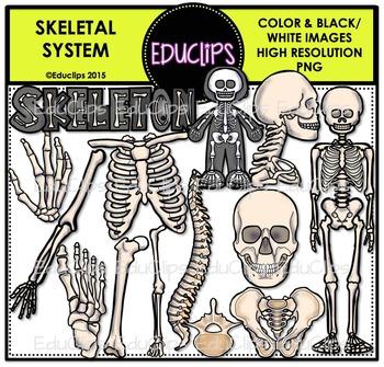 Skeletal System Clip Art Bundle {Educlips Clipart}