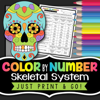 Skeletal System Color by Number - Science Color By Number