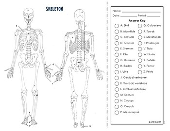 Skeletal System Coloring