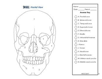 Skeletal System Coloring