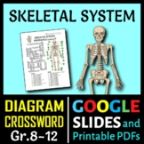 Skeletal System Crossword with Diagram {Editable}