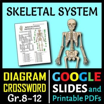 Skeletal system crossword with diagram editable by tangstar science skeletal system crossword with diagram editable ccuart Image collections