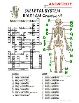 skeletal system crossword with diagram editable by tangstar science. Black Bedroom Furniture Sets. Home Design Ideas
