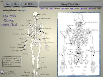 Skeletal System - Diagnostic Radiology Lab LITE