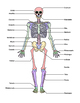 Skeletal System Diagram 8-Pack