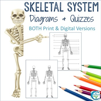 Skeletal System Diagrams - Study, Label, Quiz & Color