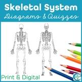 Skeletal System Diagrams - Study, Label, Quiz & Color
